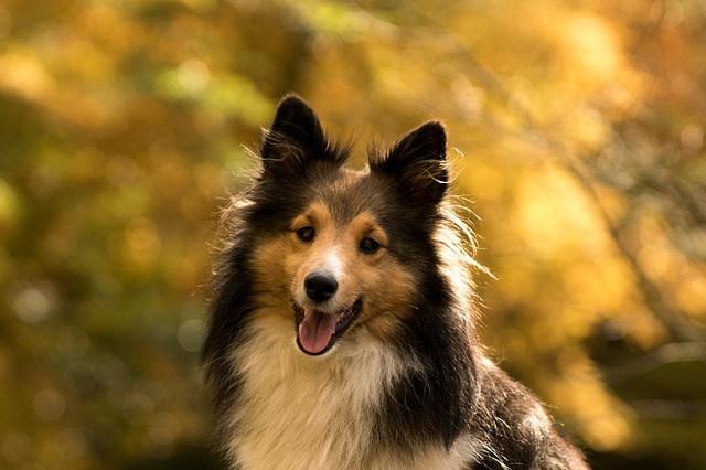 acheter niche pour chien