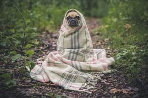 chien-niche-isolee