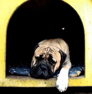 chien-niche-non-isolee